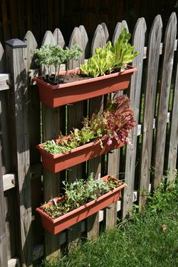 encouragement...lattice slab, window planters, and cactus plants.  cheap, easy and colorful addition to the garden