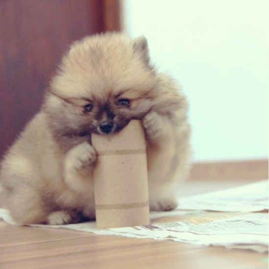 The Pom with the Toilet Paper Roll | The 40 Most Influential Poms Of 2013