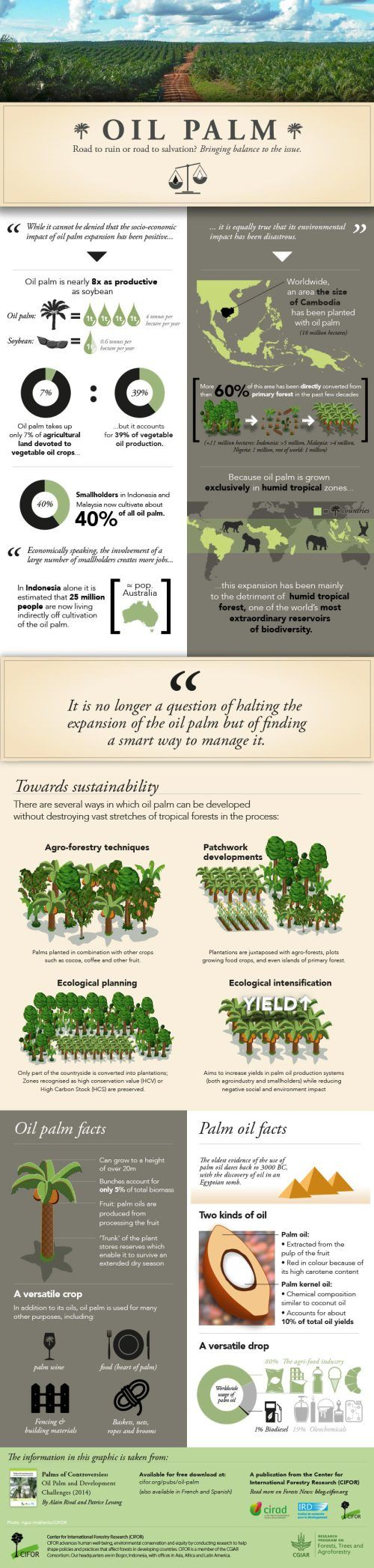Palm Oil: A visual story | CIFOR Forests News Blog