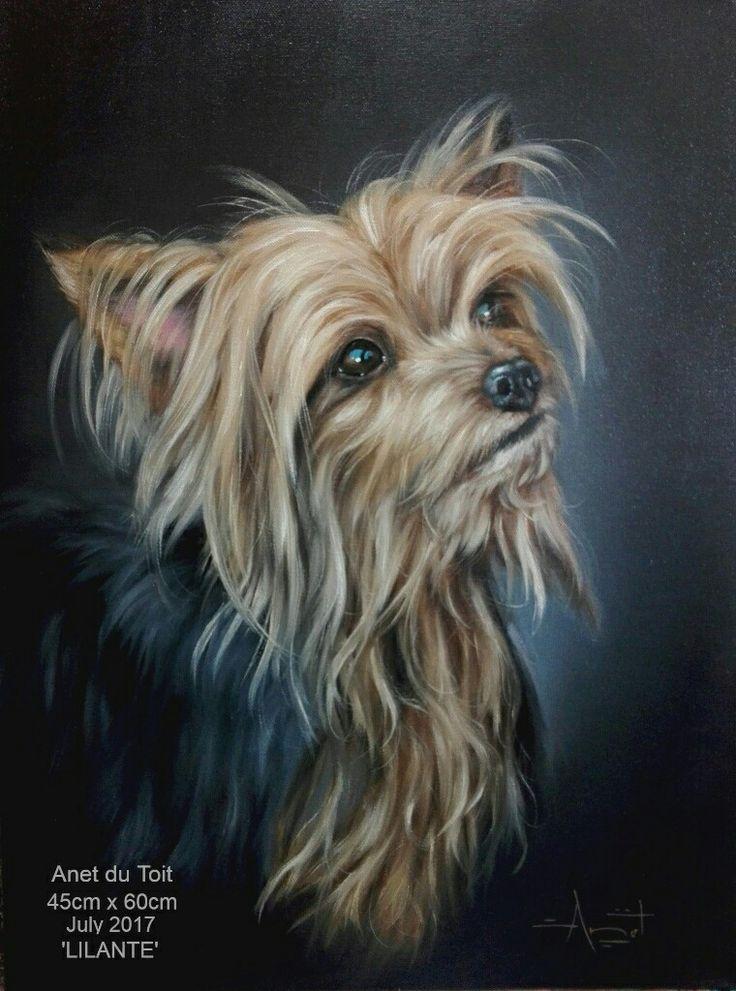Yorkie commission. Oil on canvas. 50cm x 60cm.