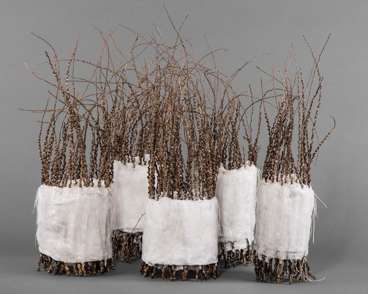 ROSE RIGLEY A preserving nature: Family DNA 2014