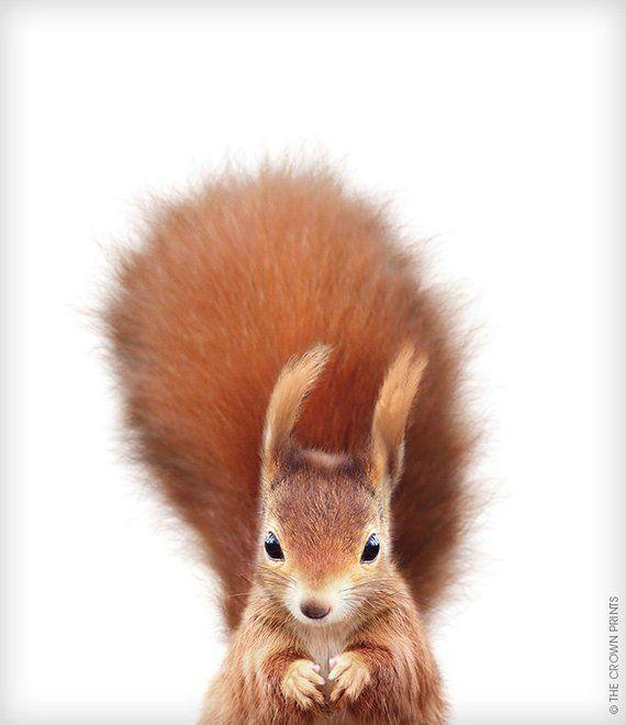 Squirrel Print, Printable Art, Crown Prints, Baby Animal Prints, Woodland Nursery Supplies