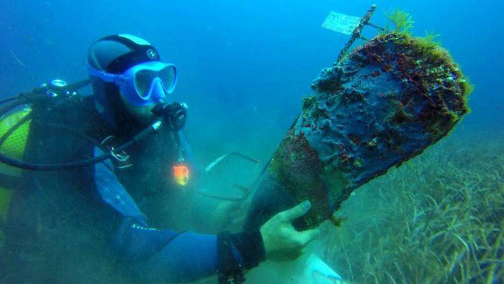 Un parásito extermina uno de los moluscos más grandes del mundo