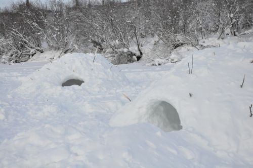 These are snow huts called quincies.  Unlike igloos, they are built by creating a large mound of snow and burrowing into it.  Sticks approximately 18 inches long are poked into the mound before burrowing.  That way, if you dig inside until you reach the tip of the sticks, you will have somewhat uniform 18 inch walls.