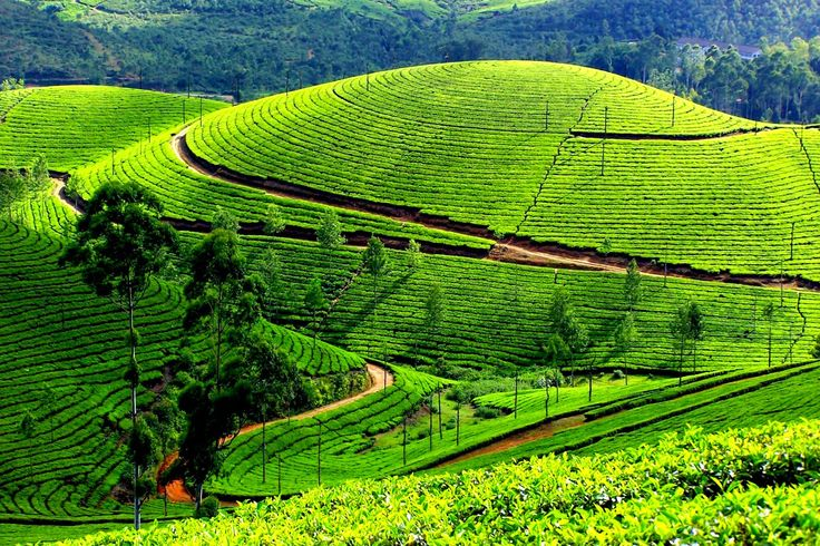 KERALA - Natural Destination to Travel For Experiantial Holidays Visit here for more details : http://goo.gl/iuNRhx