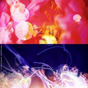 蜷川実花とクラゲの新たなコラボレーション空間が出現! | すみだ水族館