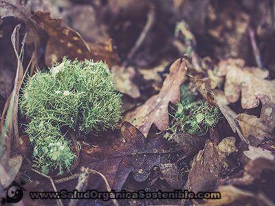 Imos nativos del bosque. Especificaciones, descripciones y usos. Tipos de microorganismos que nos podremos encontrar en cualquier metro cuadrado de bosque.