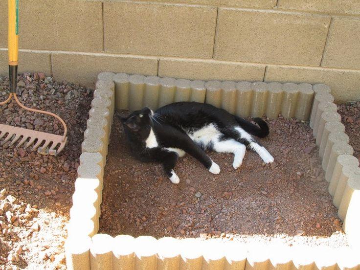 146 Best Cat Litter Box Images On Pinterest Cat Litter
