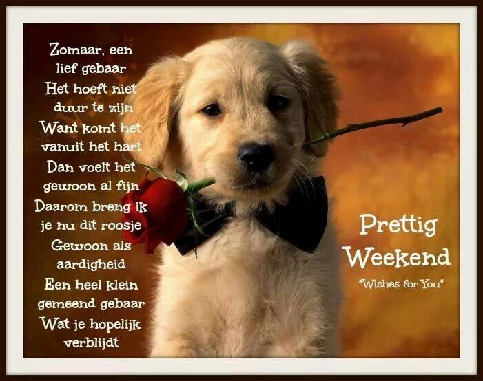 Prettig weekend! | Retriever puppy