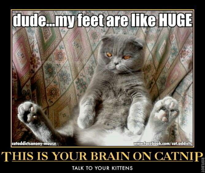 This Is Your Brain On Catnip Funny Cats That Aren T