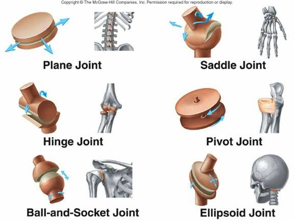 synovial joints | Types of Synovial Joints