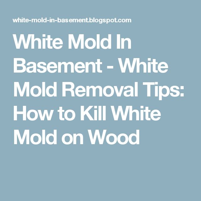 25+ Best Ideas About Mold In Basement On Pinterest