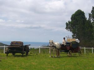 Wedding Coach with a 90 year old wagon - sea view