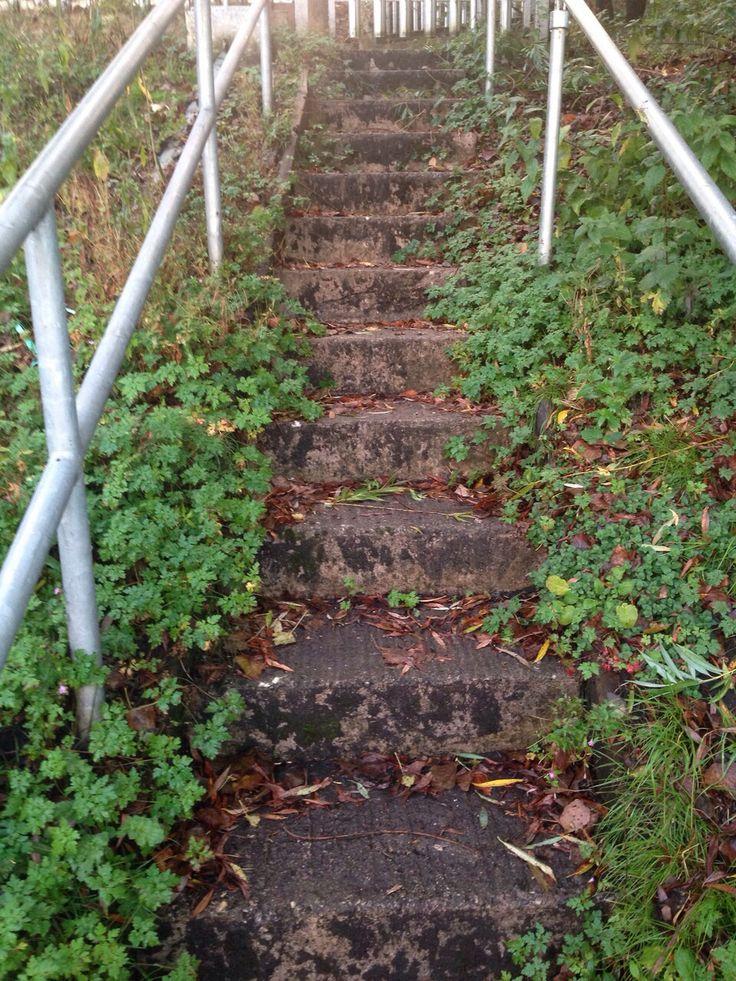 Over grown Nature stairway..