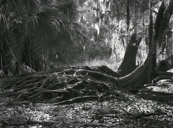 Florida the way it should be seen, through a large-format camera.