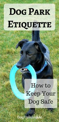 Dog park etiquette tips and how to keep your dog safe and happy. Are dog parks safe for your dog? We tell you how to choose a good dog park and what rules to you need to know before you go. Click through for all the info now.