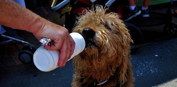 Vinkit lemmikin kanssa matkustavalle http://www.rantapallo.fi/matkailu/lomailetko-lemmikkisi-kanssa-tassa-tarkea-muistilista/