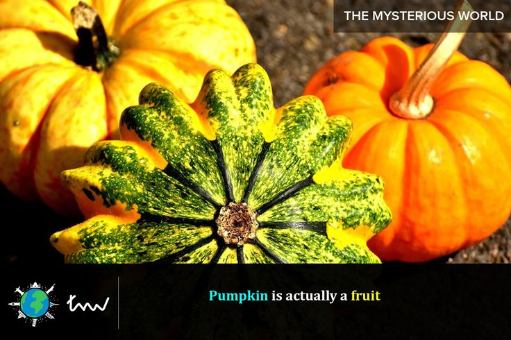 #fruits #pumpkin #facts