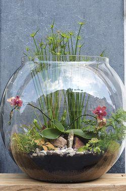 Mini garden - Terrrarium