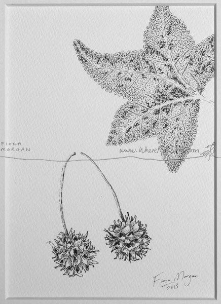 Crinkled AUTUMN Fall LEAVES Nature Illustration ORIGINAL Matted Botanical Drawing Black & White pen ink zen mindfulness by WhereFishSing