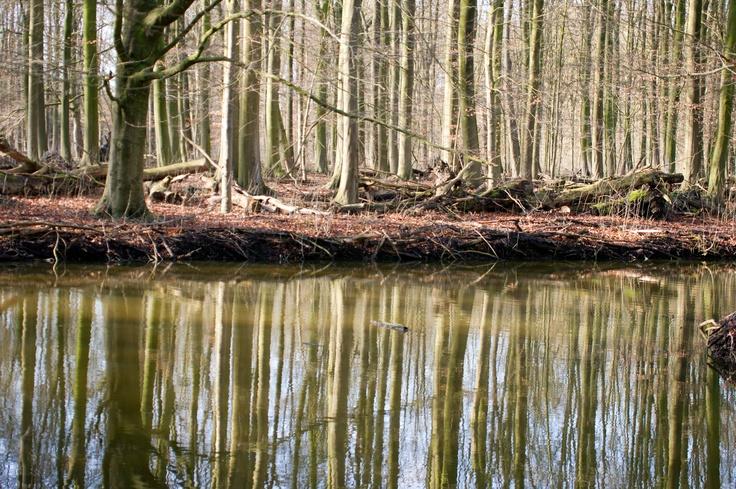 Amsterdamse bos. Amsterdam
