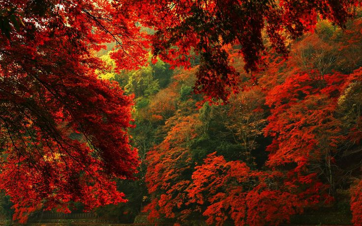 nice red autumn forest hd wallpaper Check more at http://www.finewallpapers.eu/pin/19692/