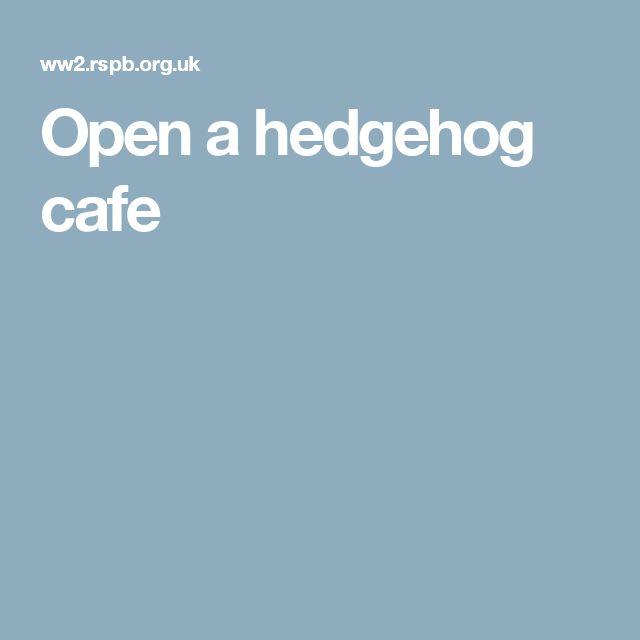 Open a hedgehog cafe