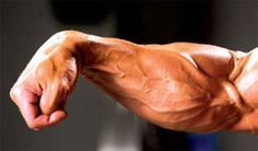 Forearm Training: How to Grow Massive Forearms Forearms are one of the most difficult muscles to grow, but having strong forearms are a must for strength training. These often neglected muscles are crucial in developing a strong upper body. The extent in which you can grow your forearm muscles depends highly on your genes. Those with long forearms have a much greater chance of growing those massive forearms more than those with short forearm muscles.