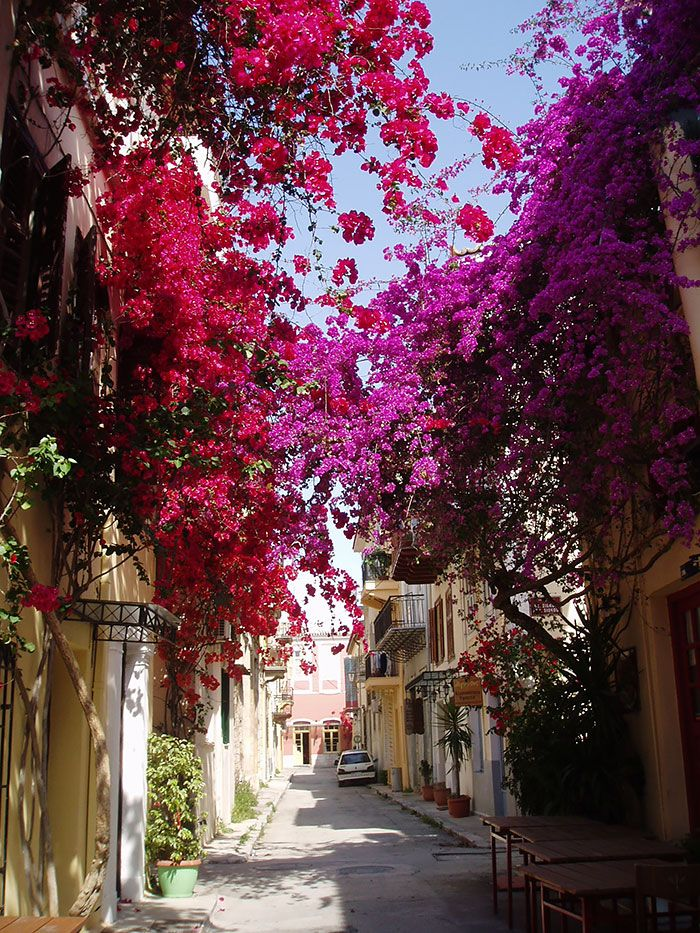 Some Of The World's Most Magical Streets Shaded By Flowers And Trees