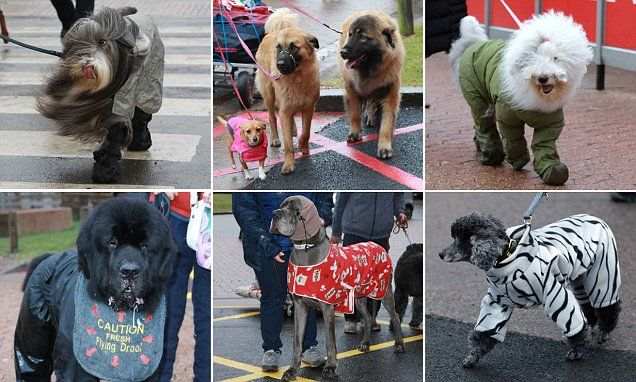 Nothing worse than a bad hair day! Crufts 2018 kicks off in Birmingham
