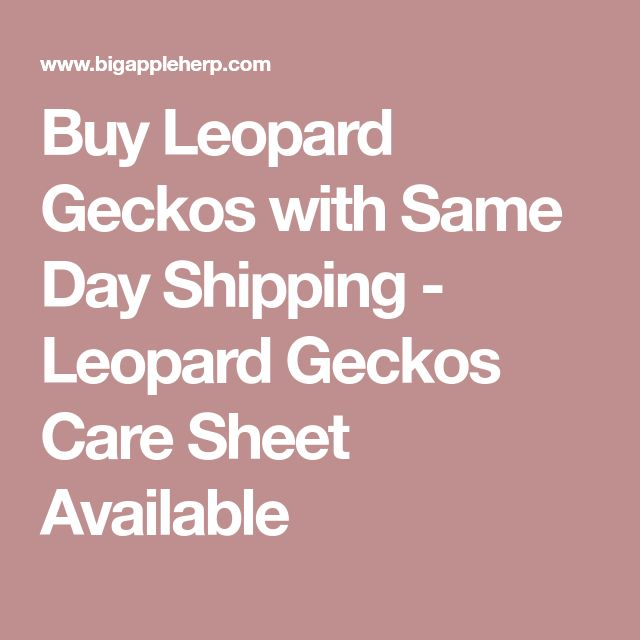 Buy Leopard Geckos with Same Day Shipping - Leopard Geckos Care Sheet Available
