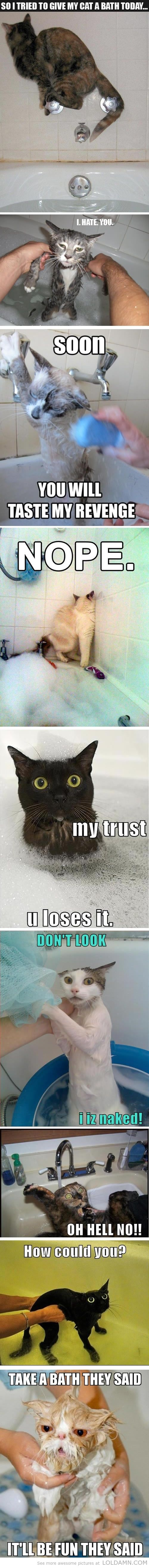 9 pictures that prove cats hate bath...