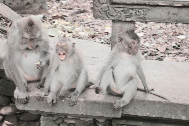 At Monkeypark, Bali, Indonesia :)
