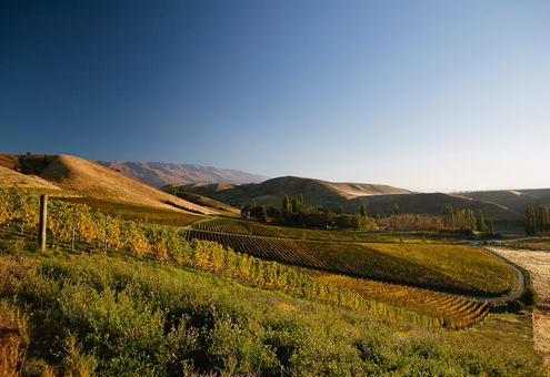 - Burn Cottage Vineyard - #cashburn producer. Amazing countryside view of vineyards