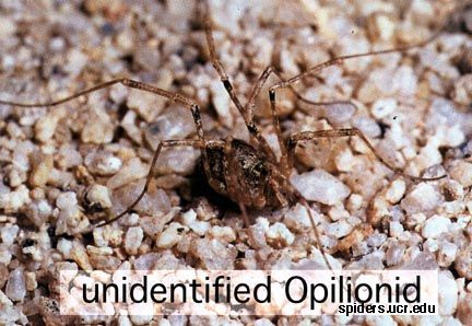 Middle school science- daddy longlegs are not poisonous! Find other animal myths for the students to research and then blog about.