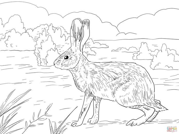 Trend Rabbit Coloring Book 34 Ausmalbild Ein Eselhase in