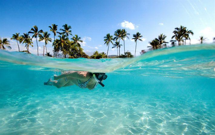 Hämta bilder Seychellerna, Dykning, ocean, tropiska öar, underwater world