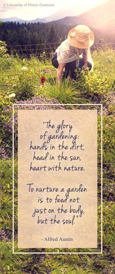 """The glory of gardening: hands in the dirt, head in the sun, heart with nature. To nurture a garden is to feed not just on the body, but the soul."" - Alfred Austin #garden #quote #outdoors"