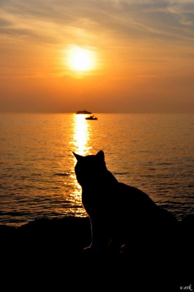 Top 46 Ideas About Sunset Cats On Pinterest Cats