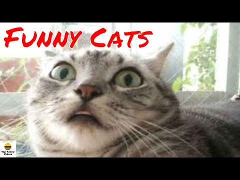 Funny Cats Compilation 2017 [Part 8] – 🐱🐱 Funny Cat Videos Ever make you LAUGH by Top Funny Videos – Rosy Helen