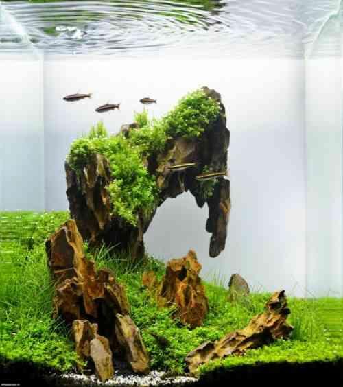 décor original de petit aquarium