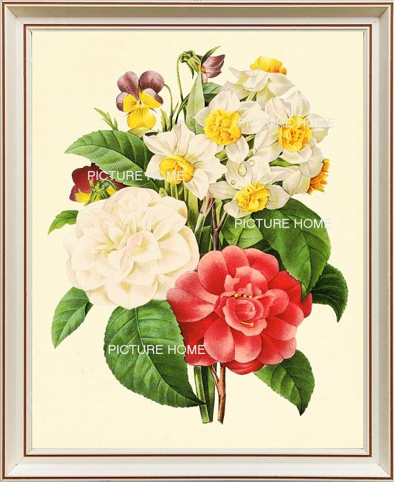Rose Narcissus Botanical Print 18 Beautiful 8x10 Antique