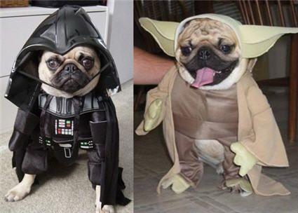 #starwars #pugs
