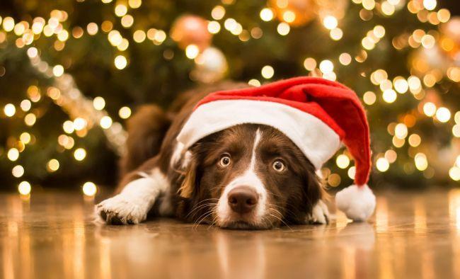 В чем встречать 2018 год Желтой Земляной Собаки - http://god-2018s ...