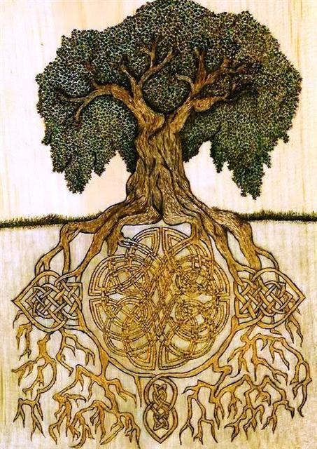 racines en entrelacs celtiques