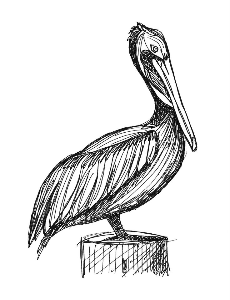 Pelican. Something like this drawing in watercolor ink