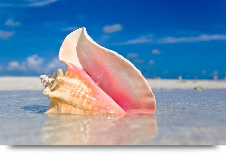 Hidden treasures. Find conch shell just north of Palmeria town on island Sal Cape Verde. Children activity.