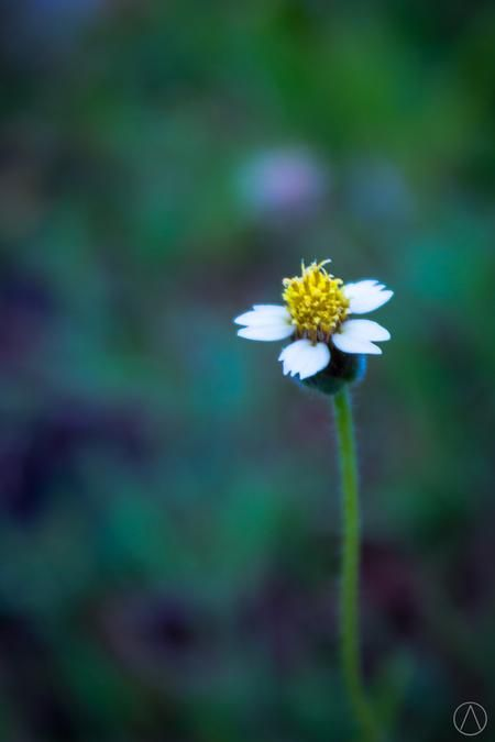 the yellow Photo by alfred chaniago — National Geographic Your Shot