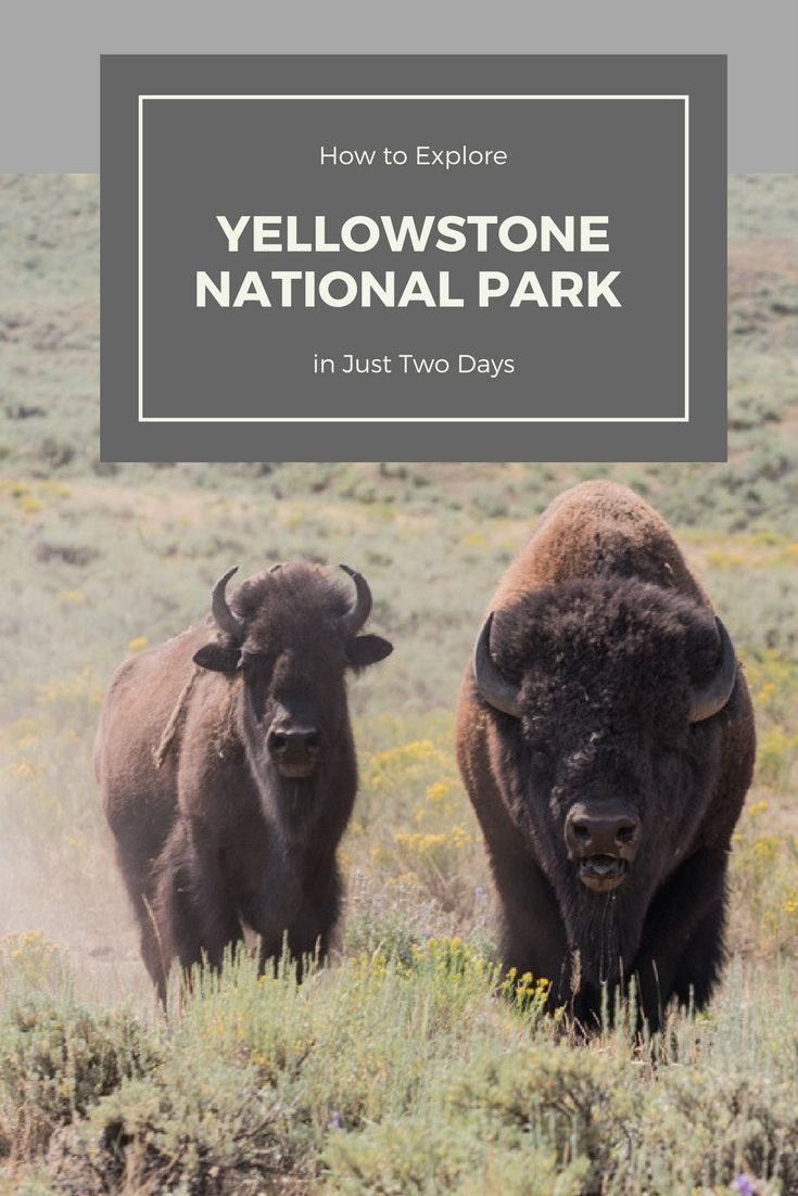 Limited on time but want to see Yellowstone? This is where to spend your time in Yellowstone National Park.