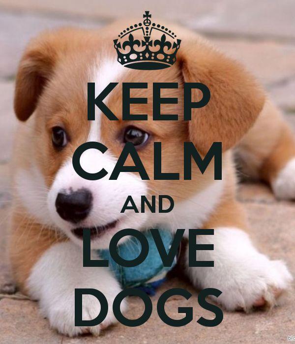 KEEP CALM AND LOVE DOGS!